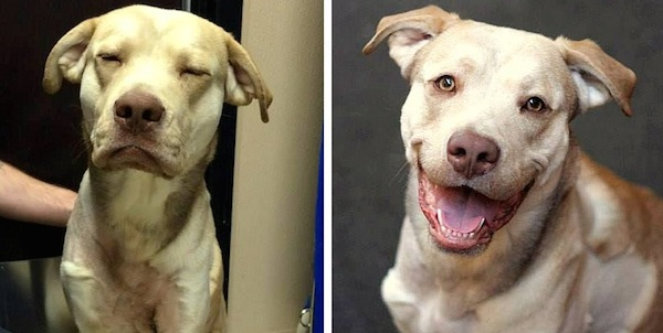 Dog With Horrific Injuries Caused by Embedded Choke Collar Goes from Sad to his Forever Home!