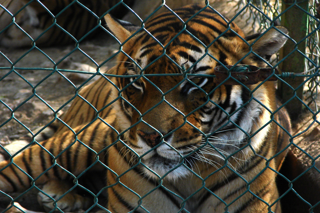 Here's Why Exotic Animals Belong in the Wild, Not as 'Pets' in Our Backyards