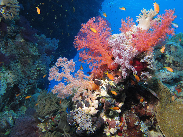 Can Coral Reefs Make a Comeback?...Only With Our Help