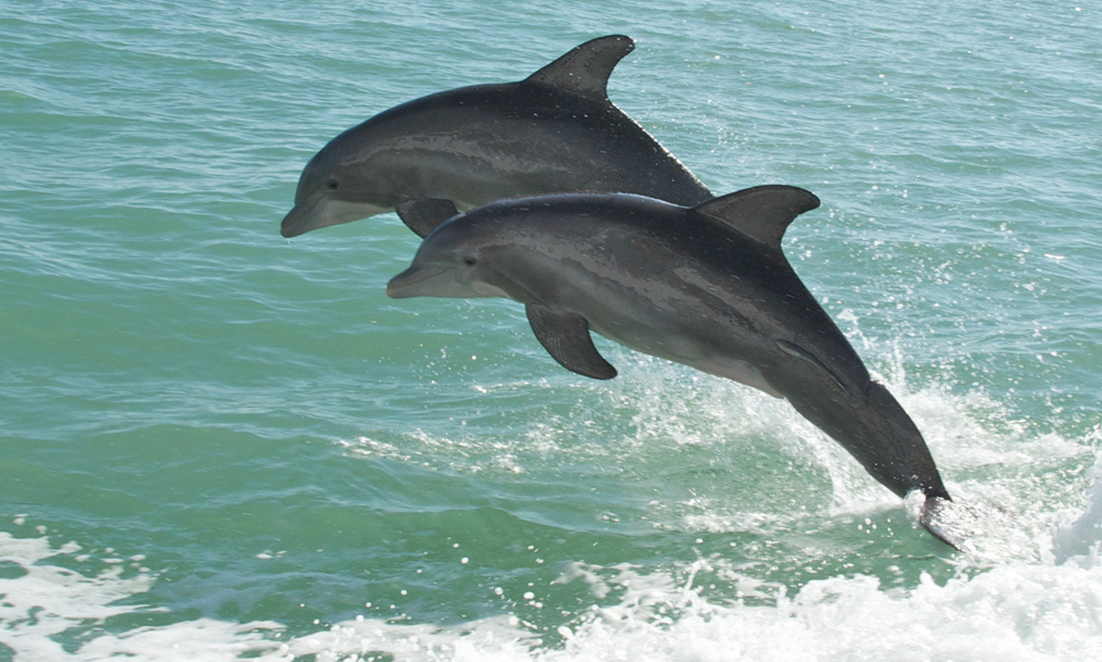 Is the Deepwater Horizon Spill Still Harming the Gulf's Dolphins?