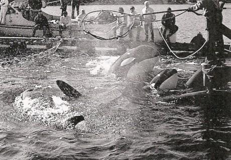 How did we get here? Development of marine captivity in the U.S.