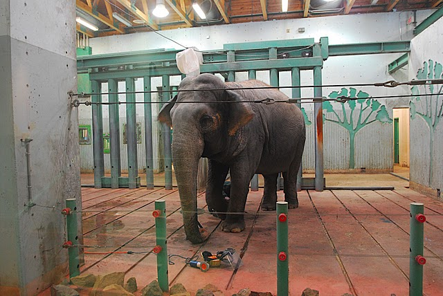Show Your Love For Lucy, the Loneliest Elephant in Edmonton