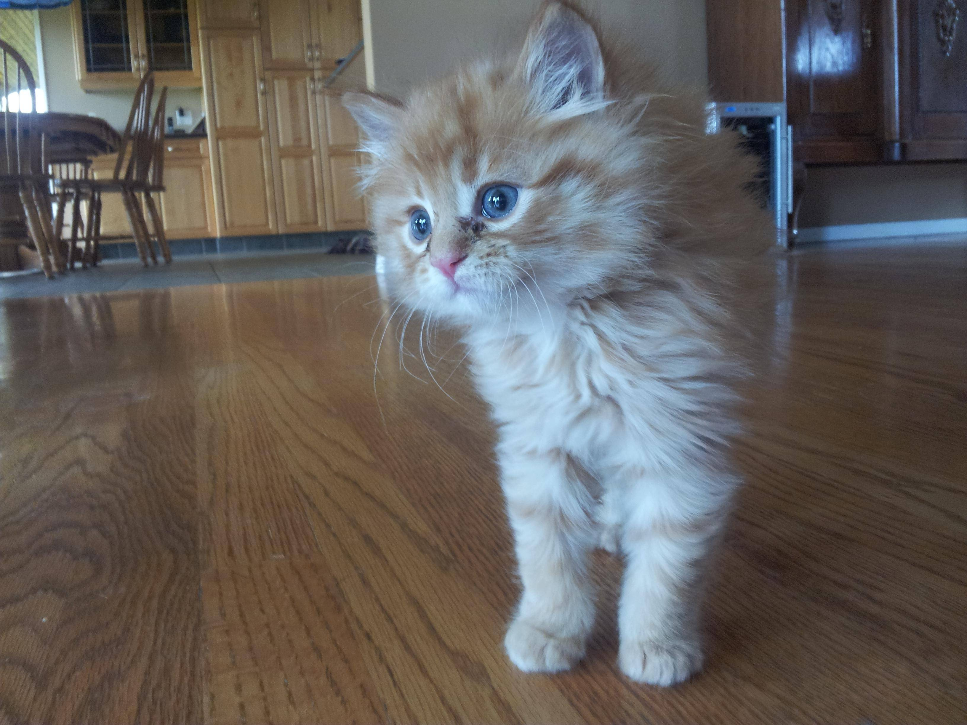 The Cutest Rescue Kitten in the World Grows Up to be the World's Most Handsome Cat