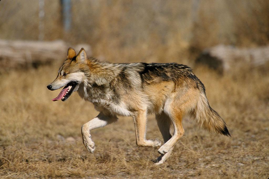 7 wolf sanctuaries
