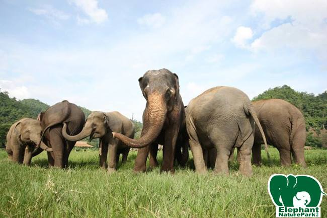 5 Awesome Alternatives to Cruel Animal Attractions in Thailand