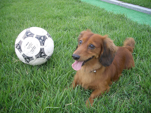 11 Easy Ways to Get Active with Your Dog11 Easy Ways to Get Active with Your Dog