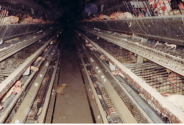 Amazing Campaign Aims to Bring Better Standards for Farm Animals to Mexico