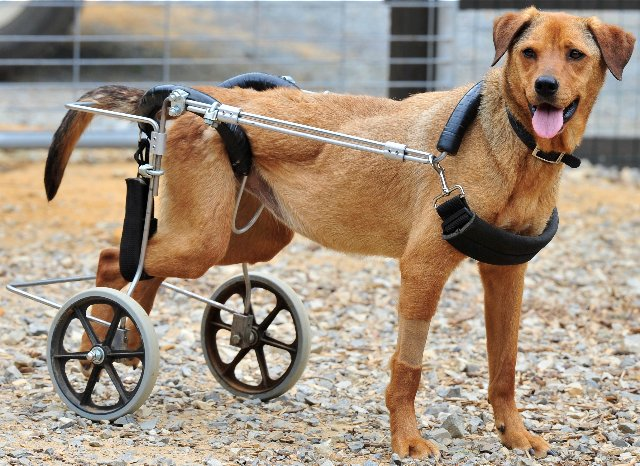 Dogs With Disabilities Get New Lives