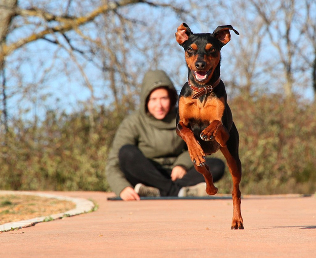 11 Easy Ways to Get Active with Your Dog