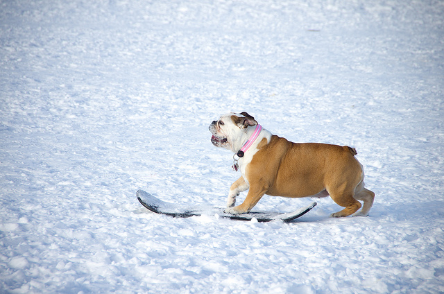 But It's 8 Degrees! 3 Reasons You Should Take Your Dog Out Anyway