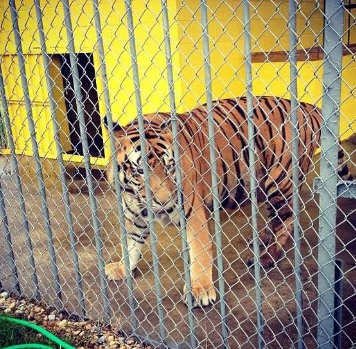 Cruelty Alert! 5 Horrific Roadside Zoos and Menageries for Exotic Animals in the U.S.
