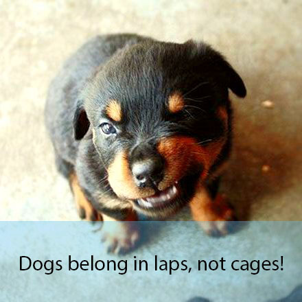 How these Six puppies feel about puppy mills