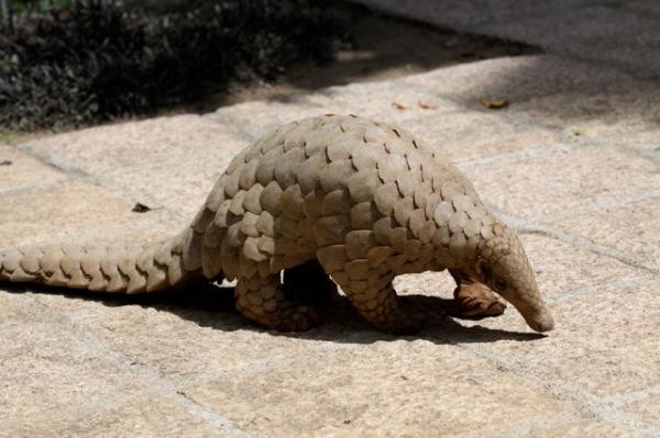 lesser known wildlife trade species