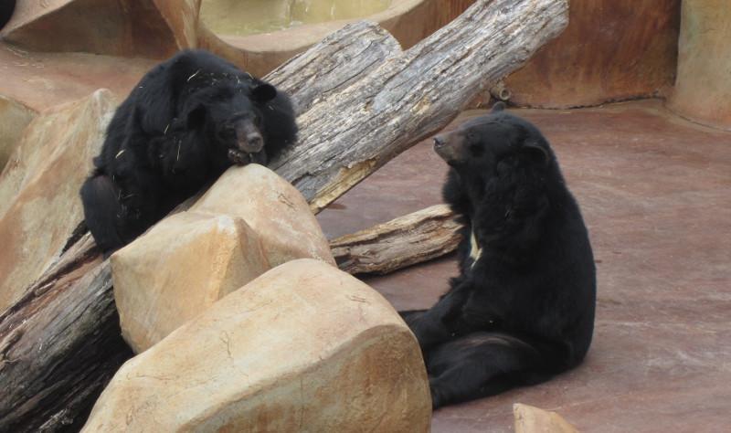 Three-Bears-General-Store-3