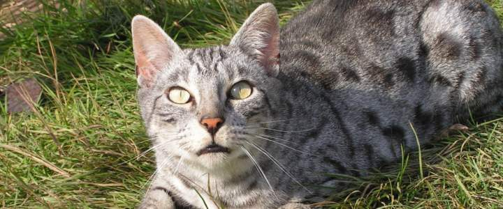 To Declaw or Not to Declaw? How This Procedure Affects Cats (Big and Small)