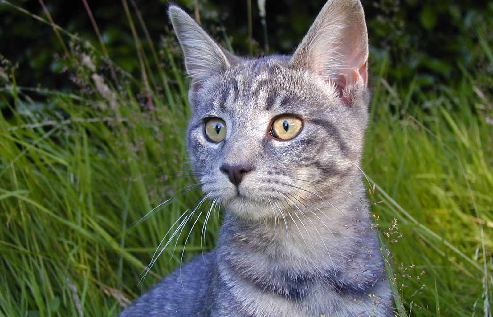All You Need to Know About Community Cats and How You Can Help Them