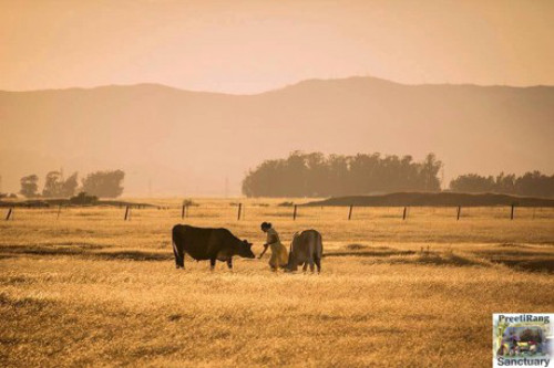 4 Grassroots Organizations That Are Transforming How We See Farmed Animals
