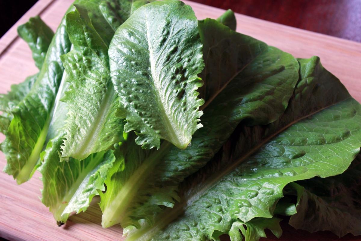 romaine-lettuce-1200x800