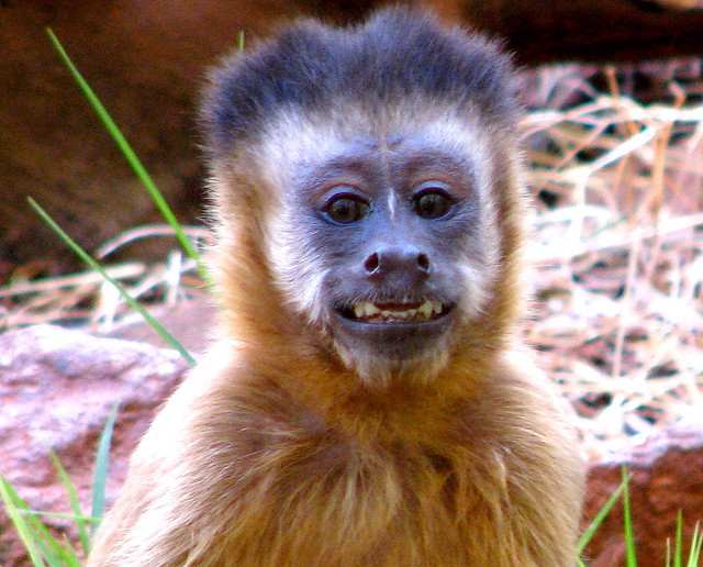 """5 Reasons Why Monkey """"Actors"""" are Nothing to Laugh About"""