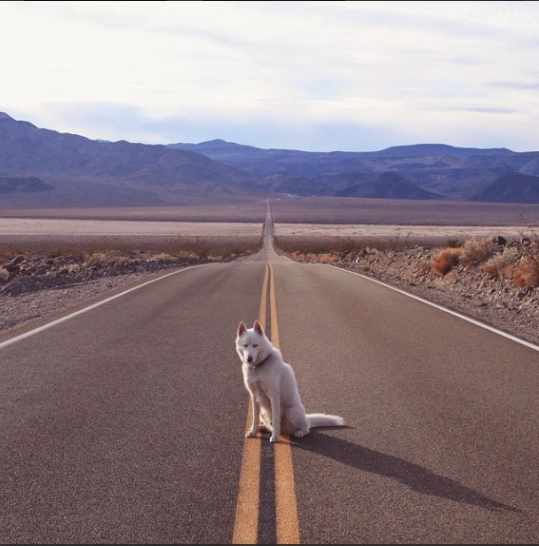 Breathtaking Photos Capture a Dog's Adventures in the Most Beautiful Places in the USA