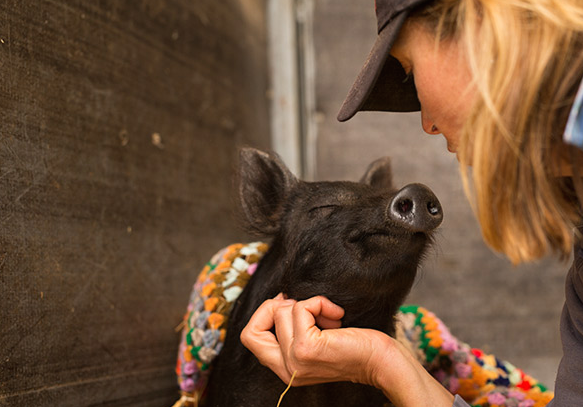 Winnie the Pig gets a chin rub from one of the workers at Edgar's Mission.