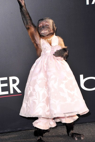 crystal-the-monkey-steals-show-at-hangover2-premiere-photos-3a