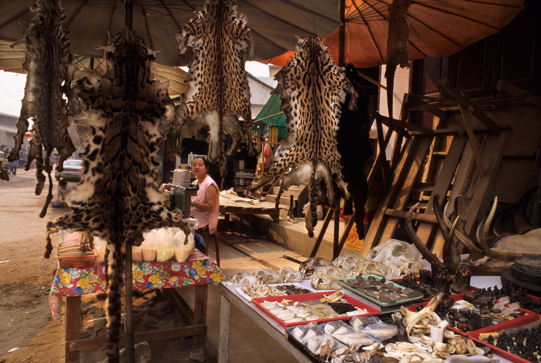 illegal wildlife trade hotspots