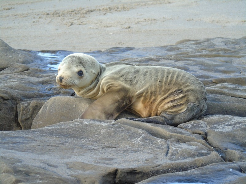 Is Our Appetite for Fish Causing Sea Lions to Starve in California?http://www.onegreenplanet.org/wp-admin/post.php?post=1481159294&action=edit&message=8