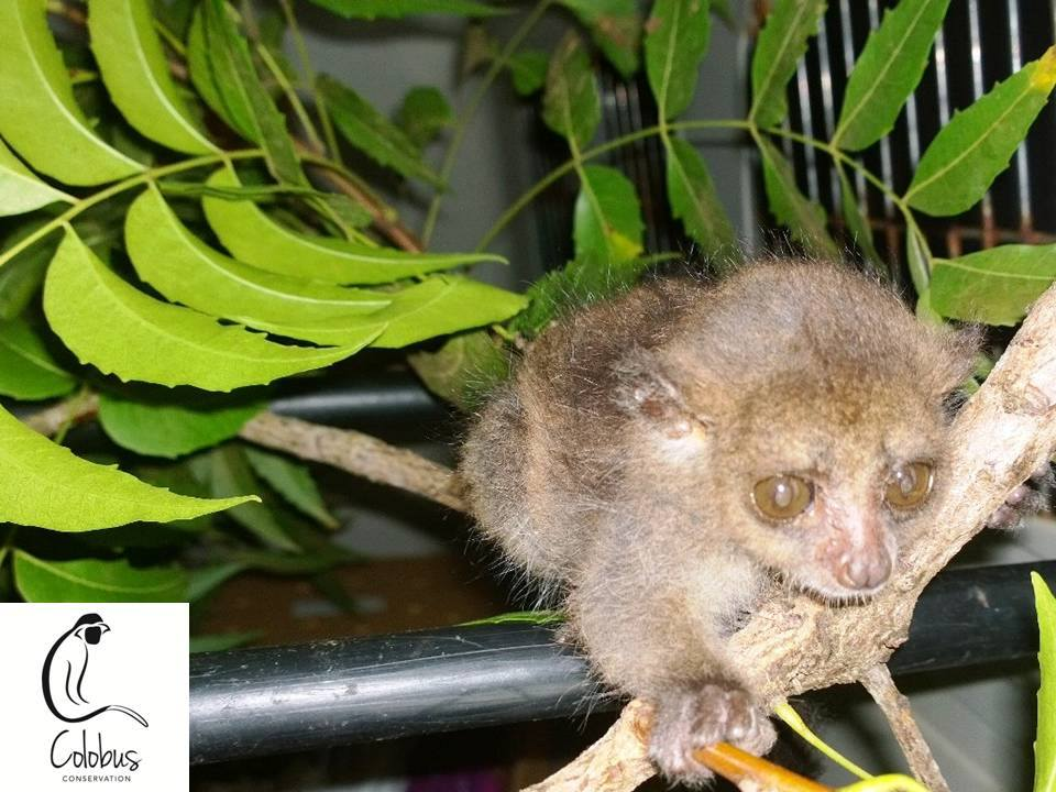Healing With the Help of Friendship: The Story of a Rescued Orphan Bushbaby and Vervet