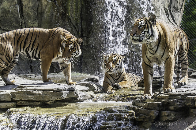 AZA-Credited or Not, Do Zoo-Based Conservation Programs Help Wild Animal Populations?
