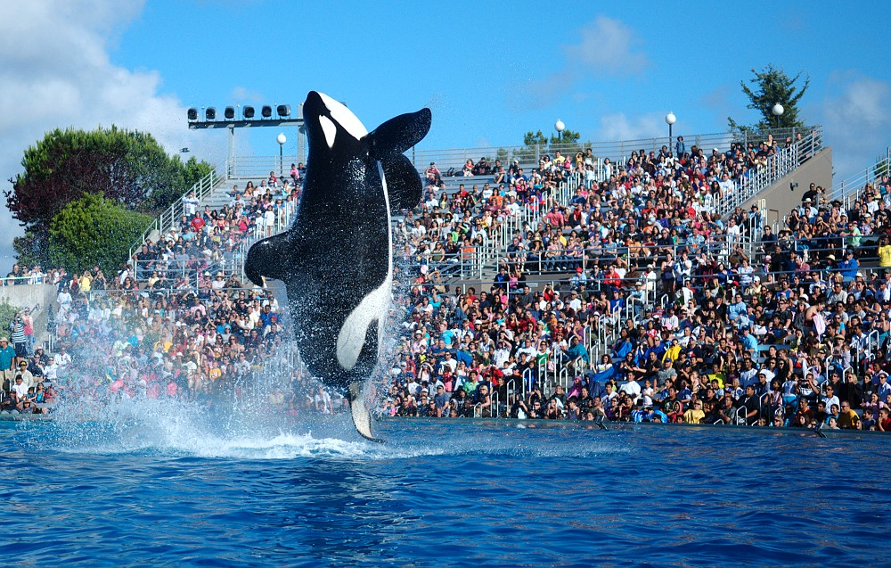 13 worst things to happen to seaworld
