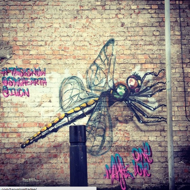 This Artist's Vibrant Murals of Threatened Species Will Inspire You to Act for Animals