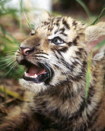 From Exotic Pet Breeder to Big Cat Rescuer: My Journey Towards Understanding