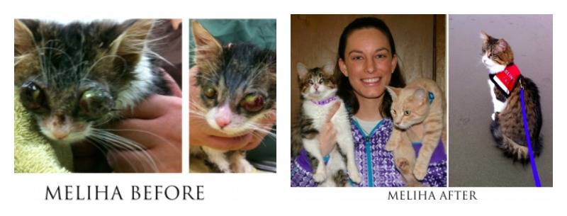 10 Before-And-After Photos of Rescued Animals That Will Make You Cry