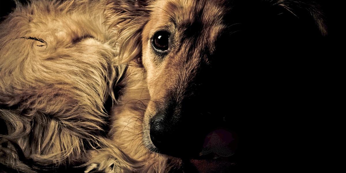 1000-scared-dog