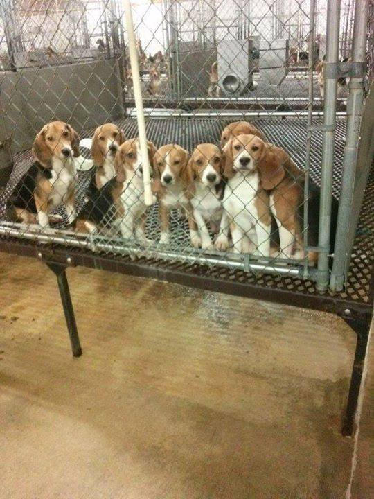 10 Shocking Facts About the Lives of Dogs Used In the Testing Industry