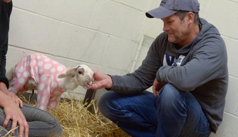 Romy: Lamb Receives Lifesaving Care
