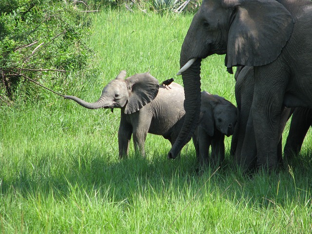 5 sanctuaries working to save endangered and abused elephants
