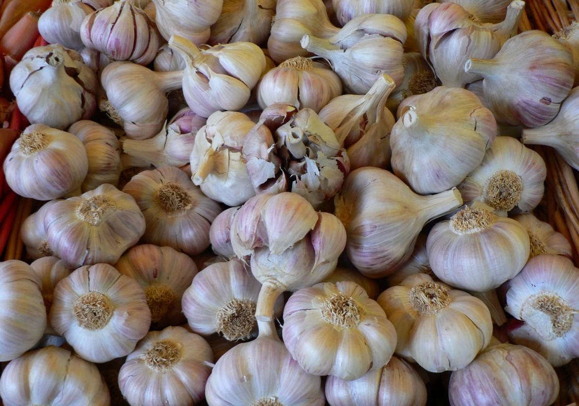 garlic-1141x800 (1)