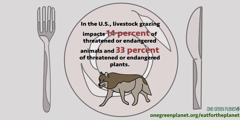 10 Shocking Environmental Facts That Will Make You Reconsider Putting Meat on Your Plate