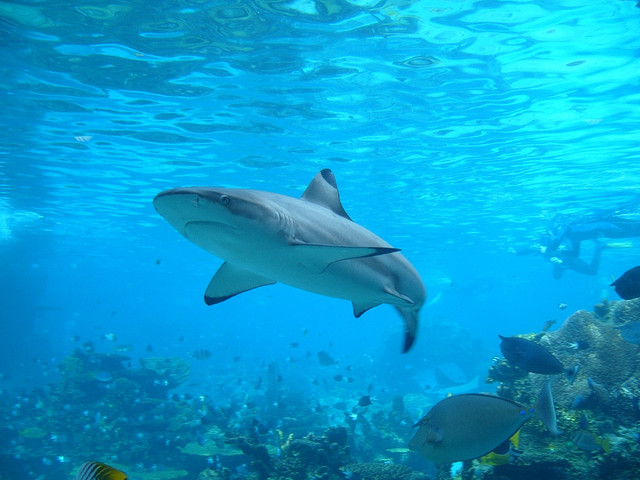 5 Ways Sharks Help the Environment