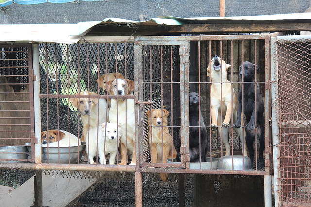 """How South Korea Manages to """"Farm"""" Dogs for Consumption Will Shock You"""