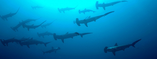 Shark Attack Numbers Are Up, But Sharks Aren't to Blame!