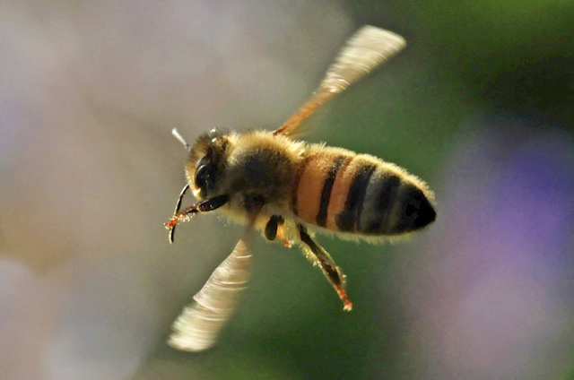As Bee Populations Decline So Will Healthy Food