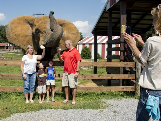 X things captive elephants never experience