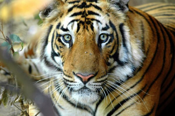 5 Shocking Things You Didn't Know About the Illegal Wildlife Trade