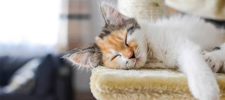 Simple Tips Every Cat Lover Needs to Keep Their Fur Baby Healthy, and Most Importantly, Happy