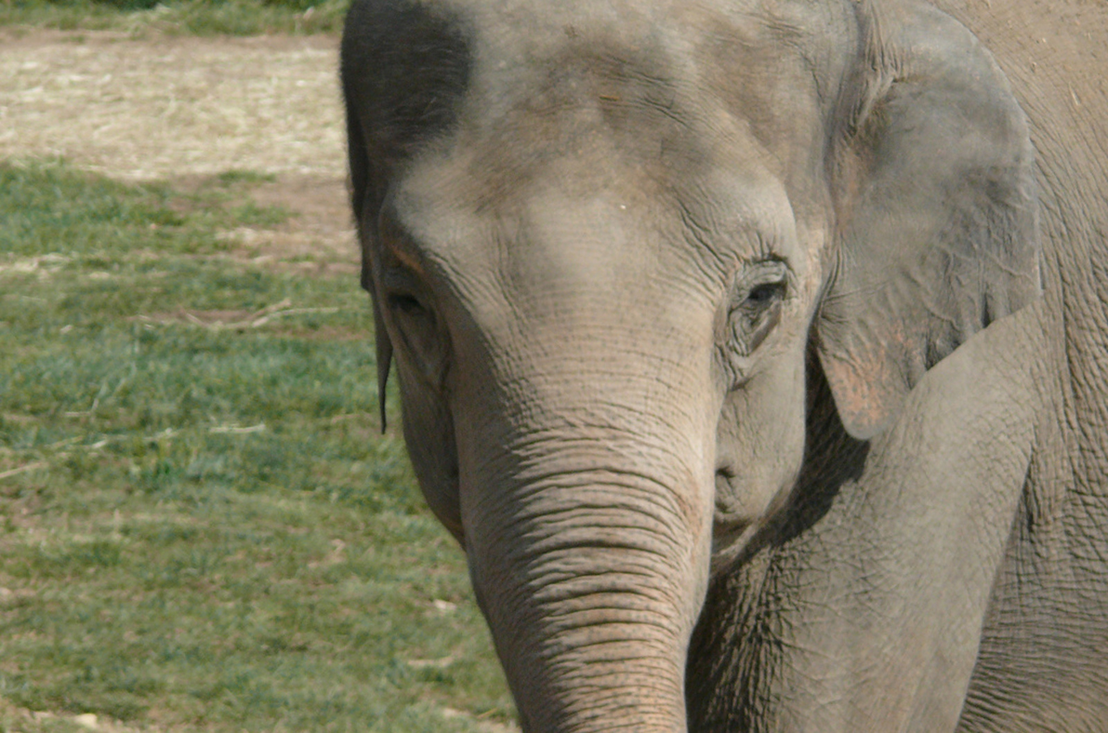 10 Years After the Bronx Zoo Ends Their Elephant Program, Happy Remains in a Solitary Prison