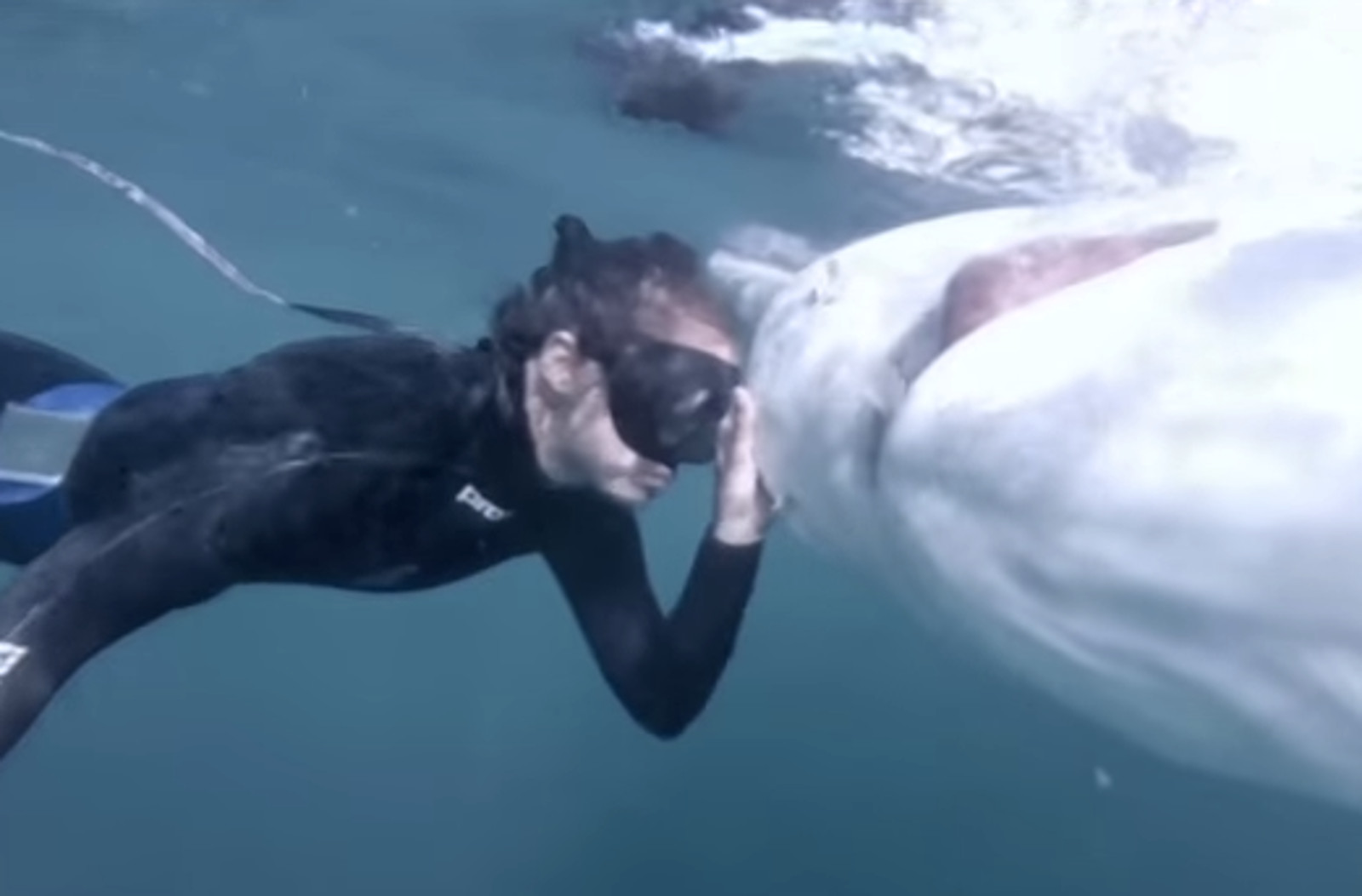 Meet the Amazing 21 Year Old Who Has Devoted Her Life to Fighting for Sharks (VIDEO)