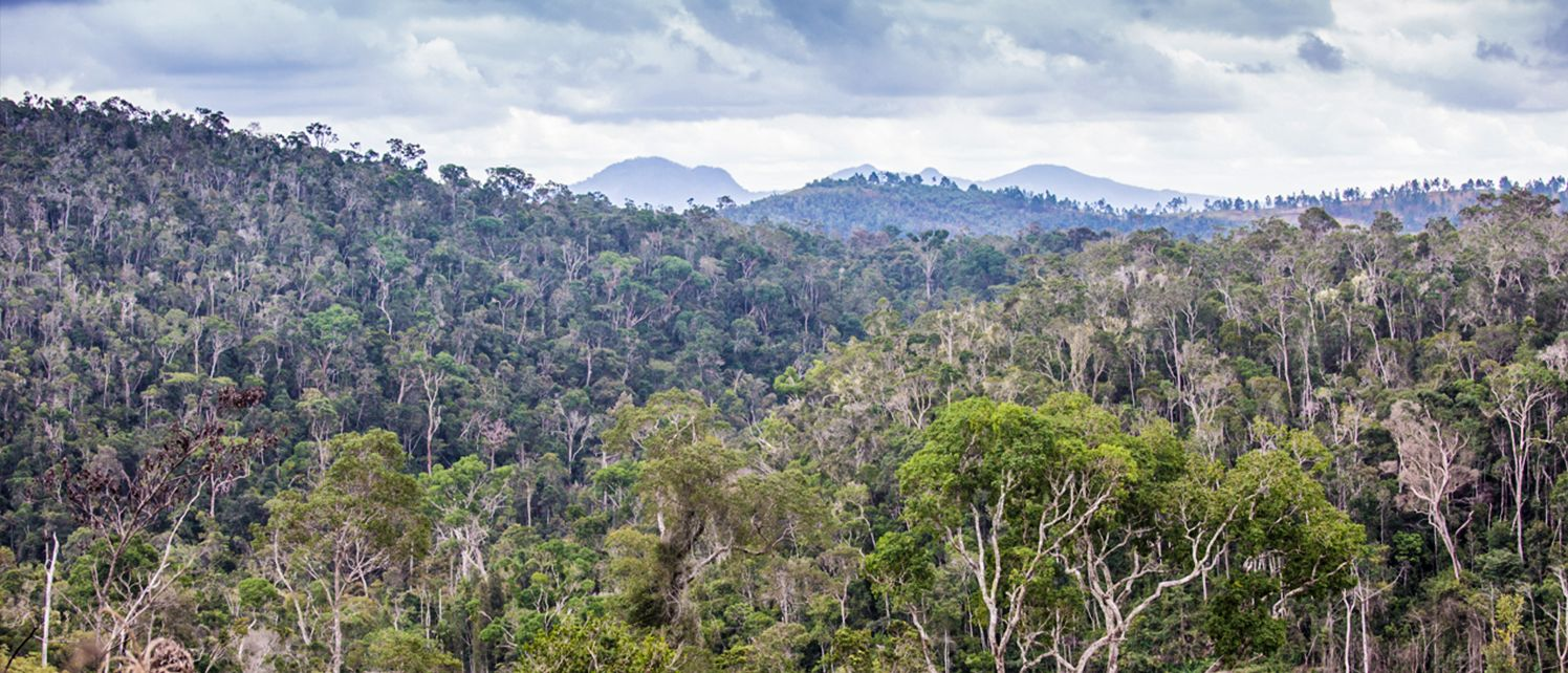 How We're Saving Madagascar's Most Endangered Species by Protecting Rainforests